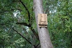 How to make a cedar bat house