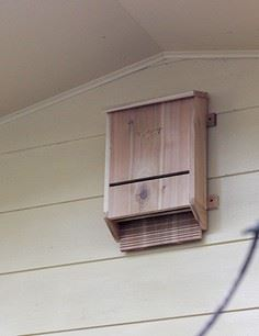 Build Your Own Bat Box