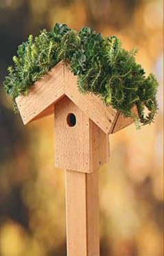 Green-Roof Birdhouse | Birds & Blooms