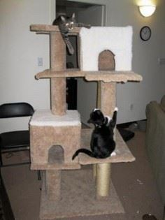 Making Your Own Cat Tree - tutoria