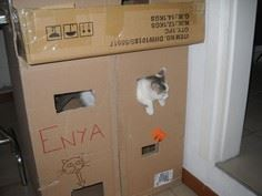 Cat Castle (very quick and easy)
