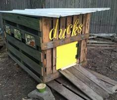Duck House 101