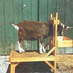 Plans for building a goat milking