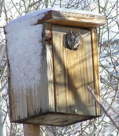 How to build an owl box for screech owl