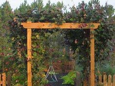 HOW TO BUILD A DECORATIVE WOOD ARBOR