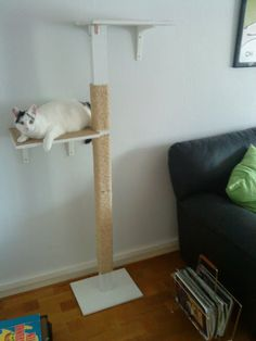 Kitty cat's Clawpole