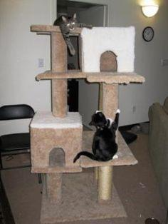 Cat Tree Plans Scratching Posts Cat Platforms Ladder Plans