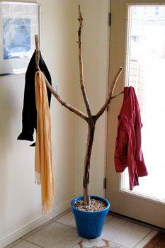 Branch Into a Coat Rack