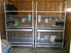 DIY Rabbit Cage Rack :: tutorial