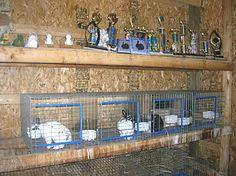 Build Rabbit Hanging Cages - Detailed Instructions and Plans