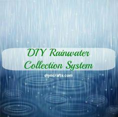 Build a Rainwater Collection System