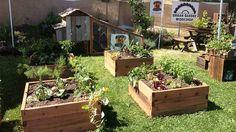 Gardening Using Raised Beds