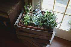 Crated succulents tutorial