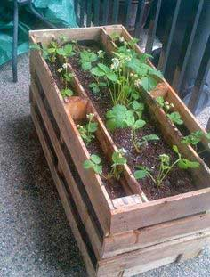 Make a Strawberry Pallet Planter