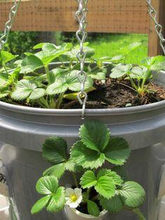 Strawberry Planter Tutorial