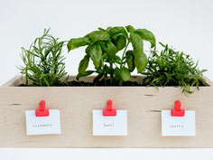 kitchen planter box