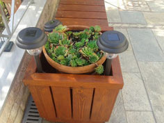 Bench and Planter Box