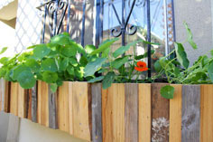 Planter for Windows with Bars